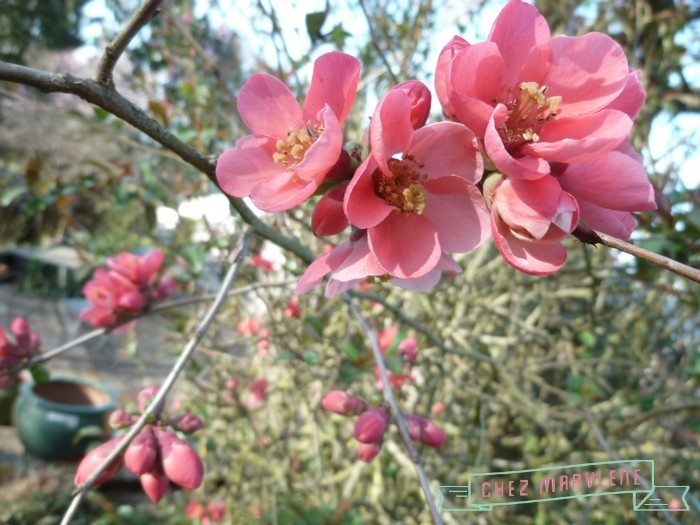 atelier patchwork jardin avril 2015 (16)