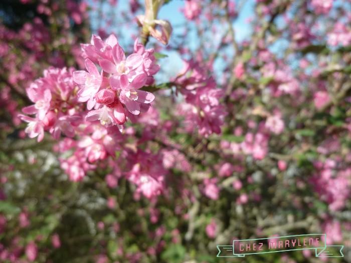 atelier patchwork jardin avril 2015 (17)