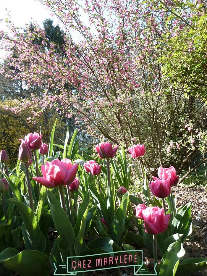 atelier patchwork jardin avril 2015 (19)