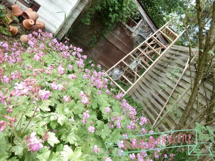 jardin de mai  (12)