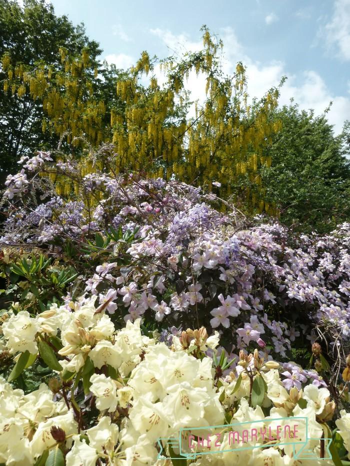 jardin de mai  (14)