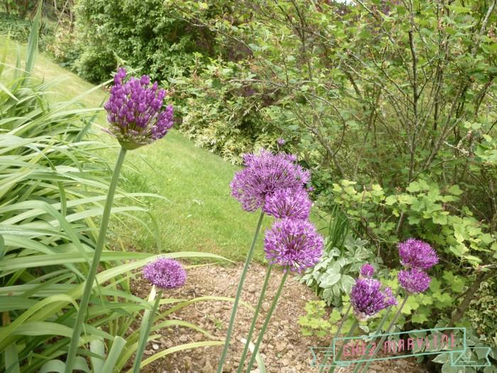 jardin de mai  (16)