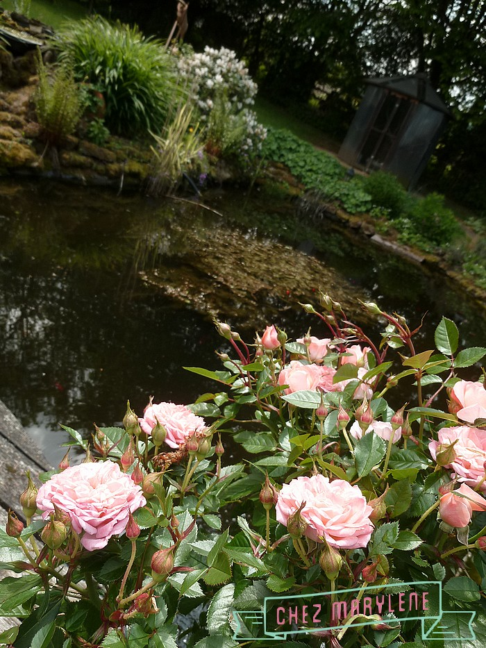 jardin de mai  (17)