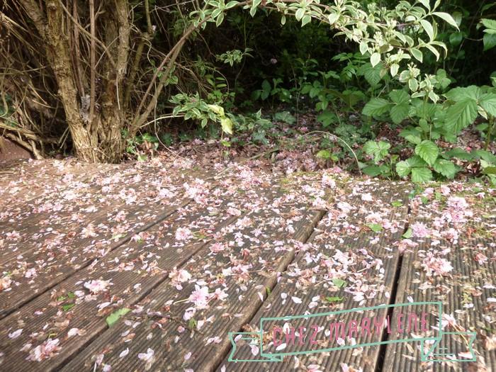 jardin de mai  (3)