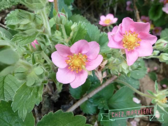jardin de mai  (8)