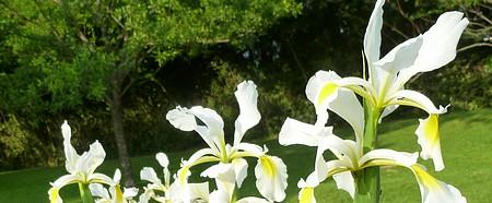 jardin blanc 2