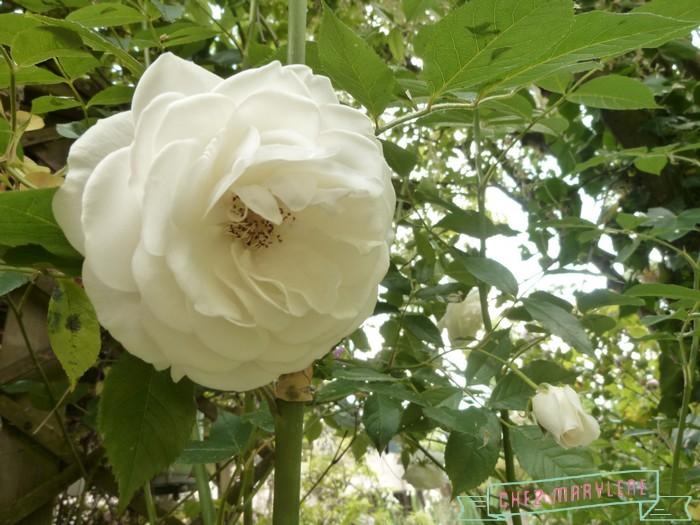 jardin blanc 5