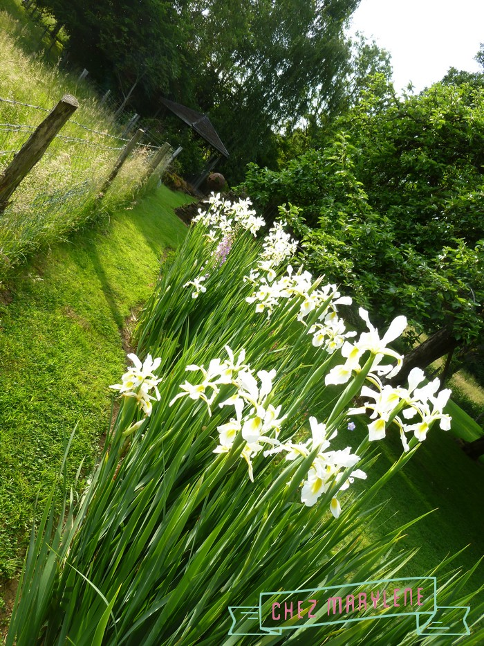 jardin blanc 7