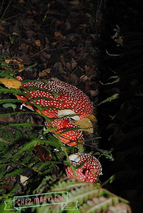 jardin d'automne (10)