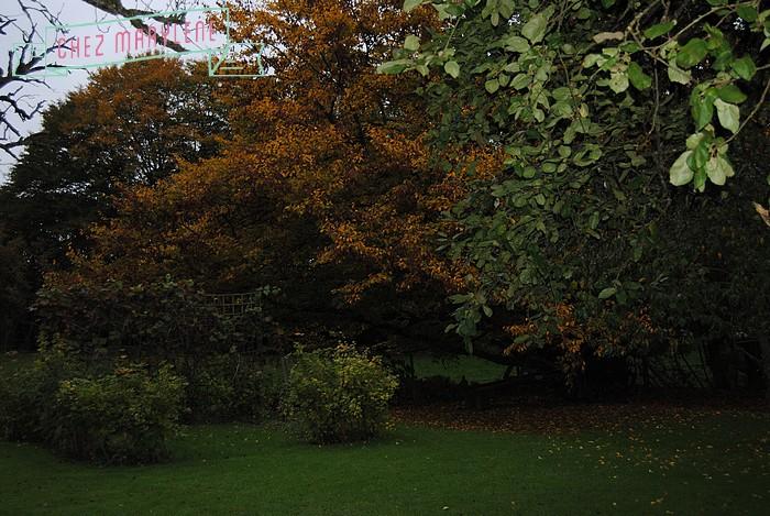 jardin d'automne (18)