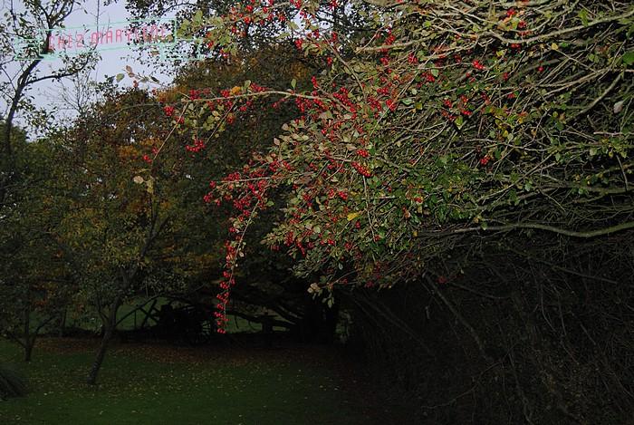 jardin d'automne (19)