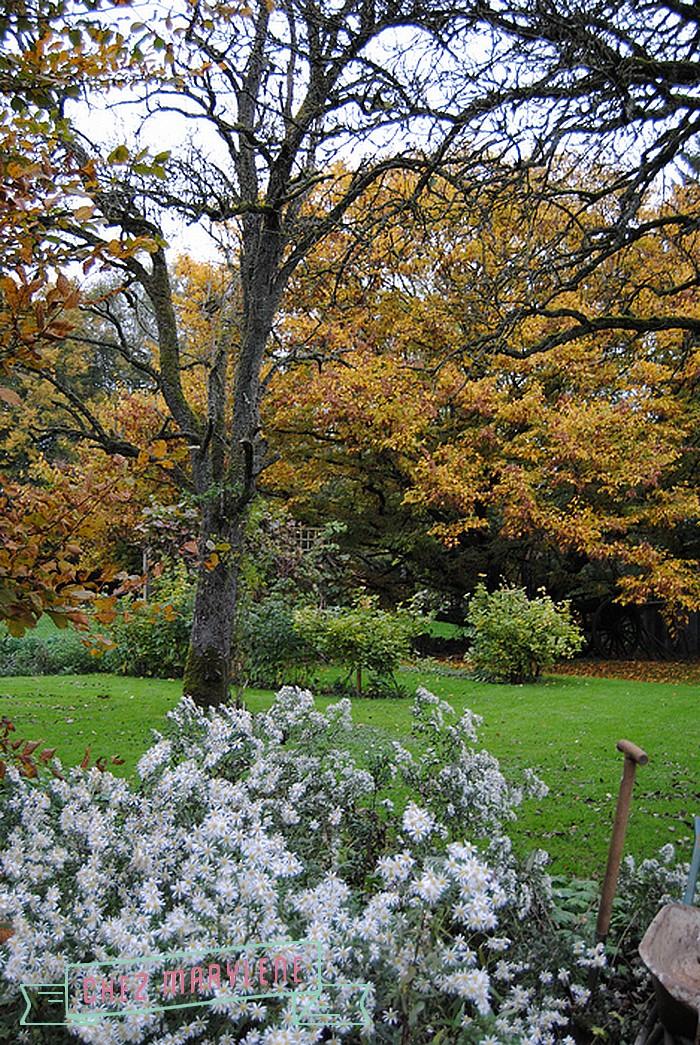 jardin d'automne (4)