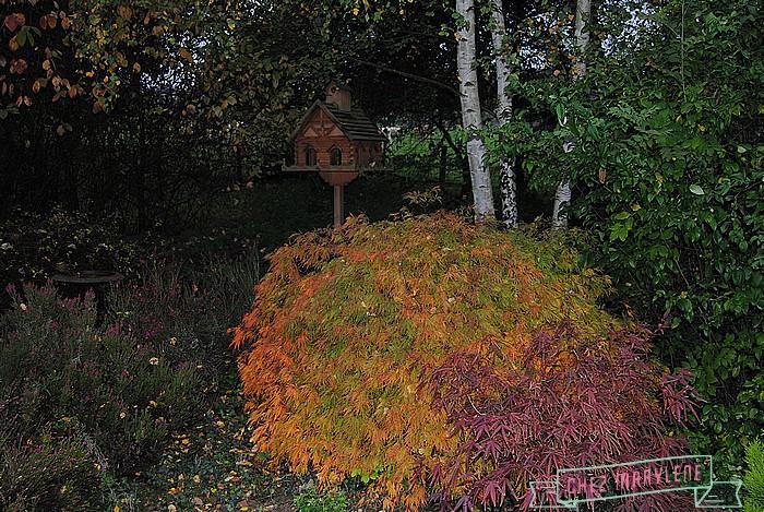 jardin d'automne (5)