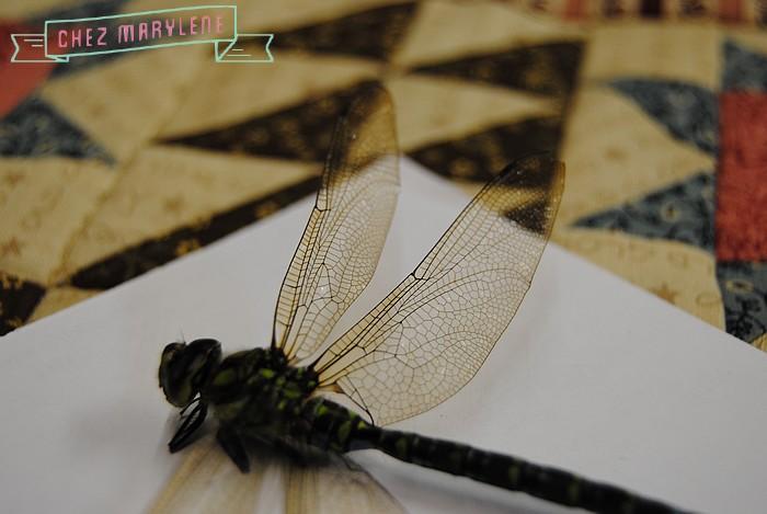 libellule (3)