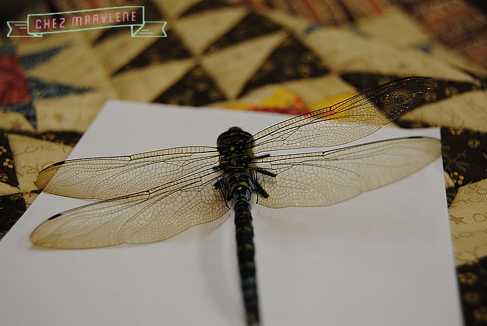 libellule (7)