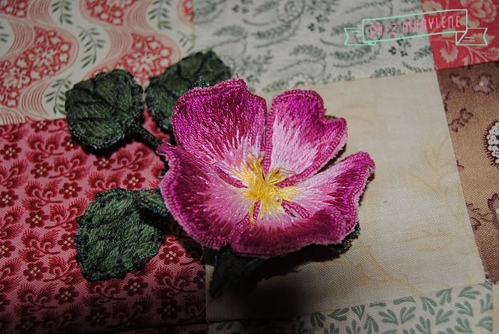 rose briar (5)