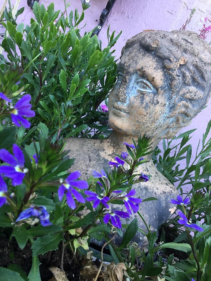 jardin-juin-201704