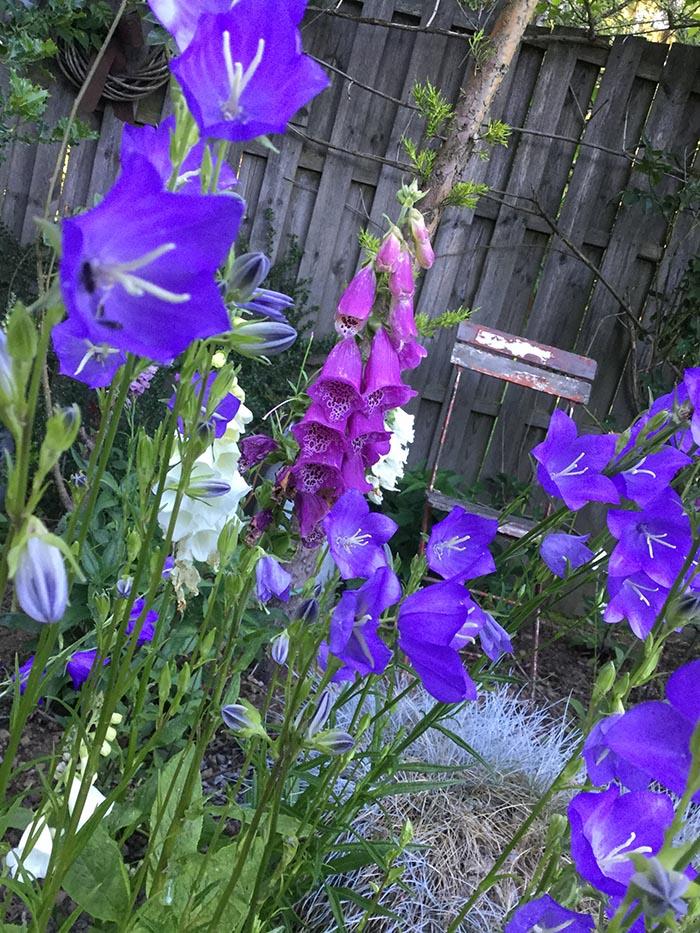 jardin-juin-201708