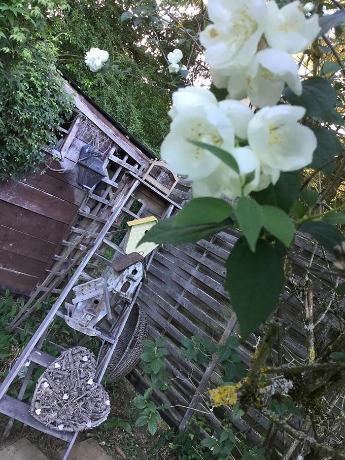 jardin-juin-201713