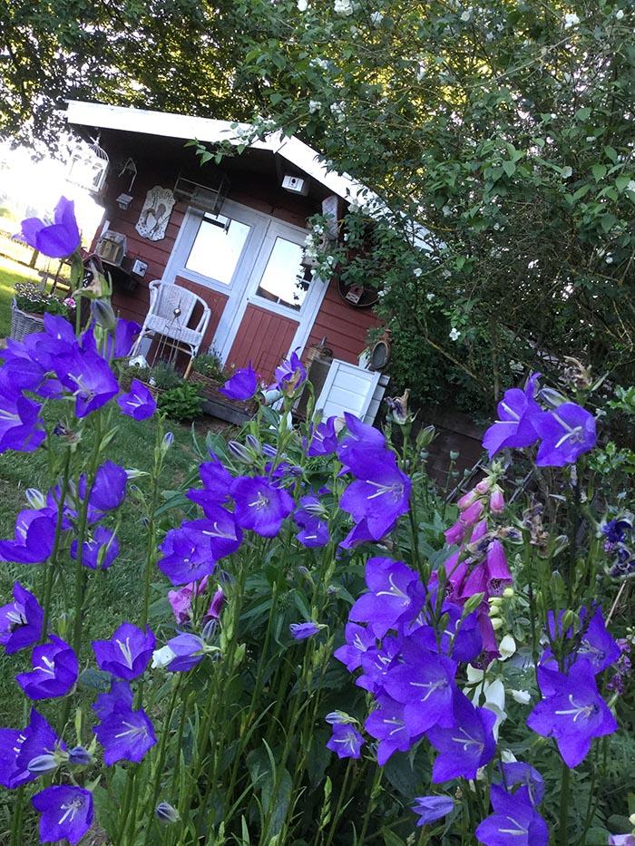 jardin-juin-201715