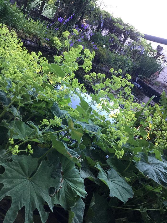 jardin-juin-201761