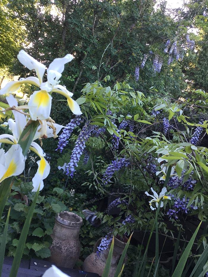 jardin-juin-201763